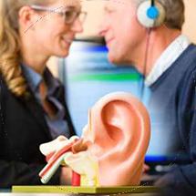 ucho i jego rola